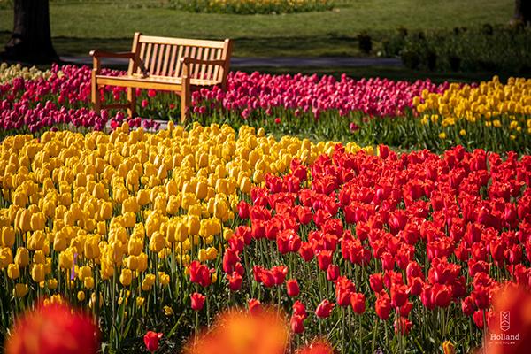 Virtual Tulip Tour